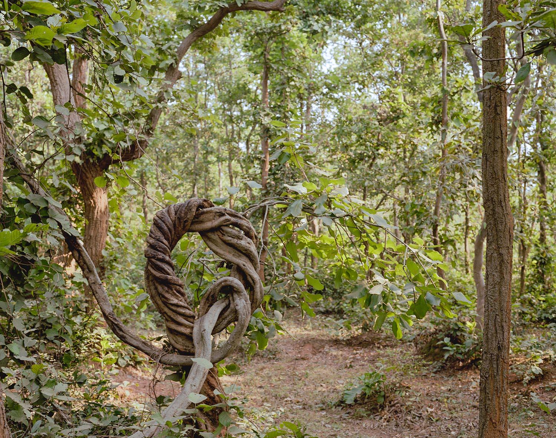 travel-santiniketan-forest-2012